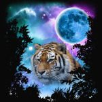 Tiger MidNight Forest