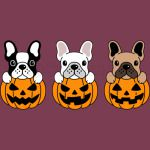 Pumpkins and Dogs