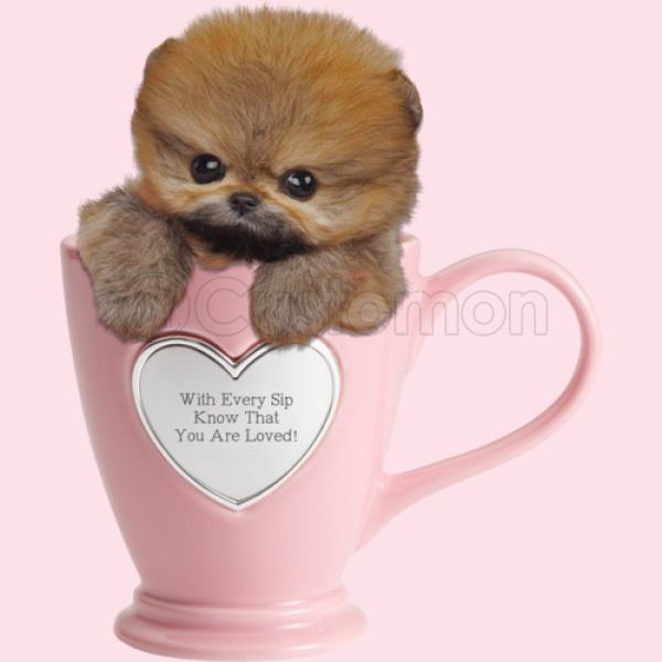 Teacup Pomsky Valentine Baby Bib - Customon